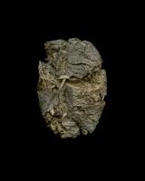 Camel dung